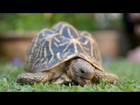 What To Feed A Star Tortoise