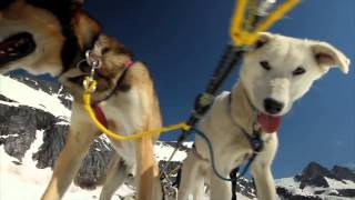 Blue Kennels and Dog Sled Trips