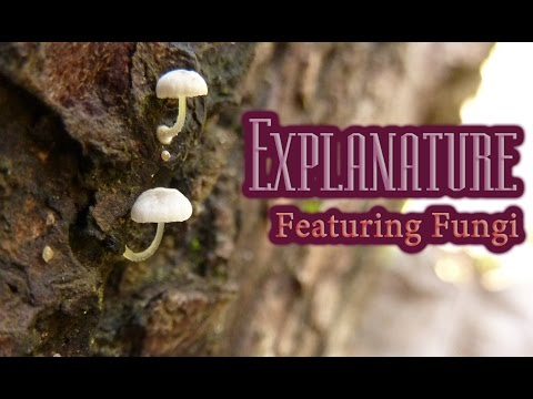 Featuring Fungi: Strange and Influential