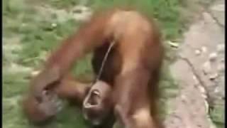 Zábavné video o opiciach