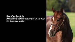 Bet On Scotch (Metallic Cat x Purdy Bet by Bet On Me 498)
