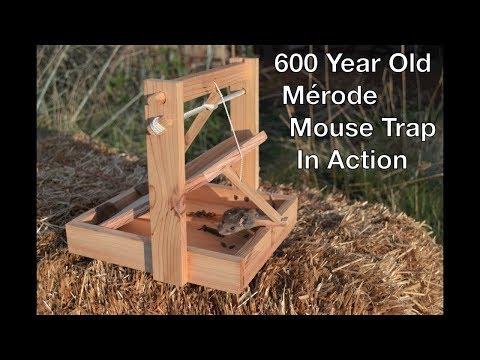 600 Year Old Style Merode Mouse Trap In Action. Best Trigger System I Have Ever Tested