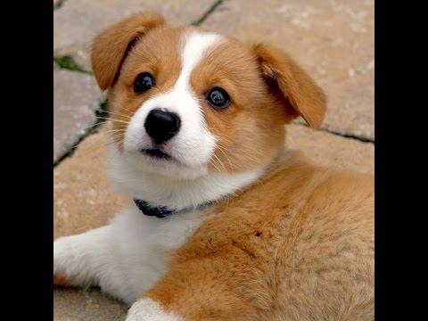 Unduh 44+ Gambar Anak Anjing Lucu Banget Terlucu