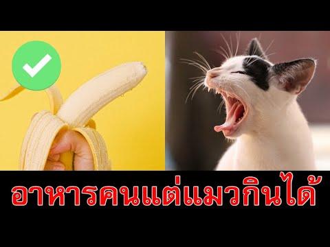 11 อาหารของมนุษย์ที่แมวกินได้