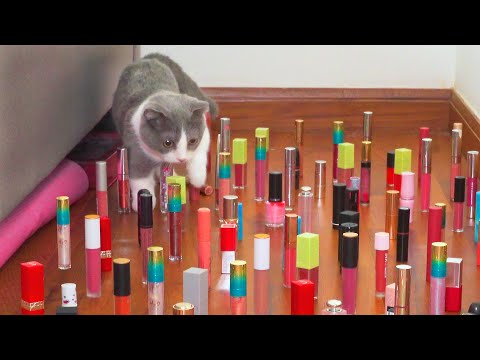 Kitten Tries Obstacle Course Challenge!