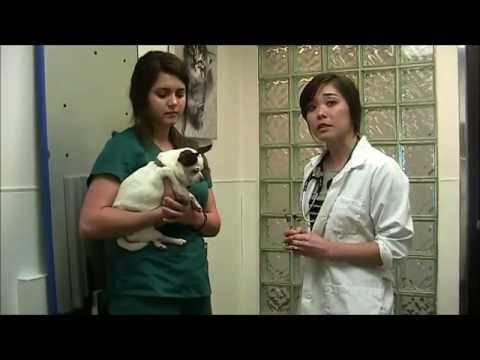 how-to-give-your-dog-an-insulin-injection