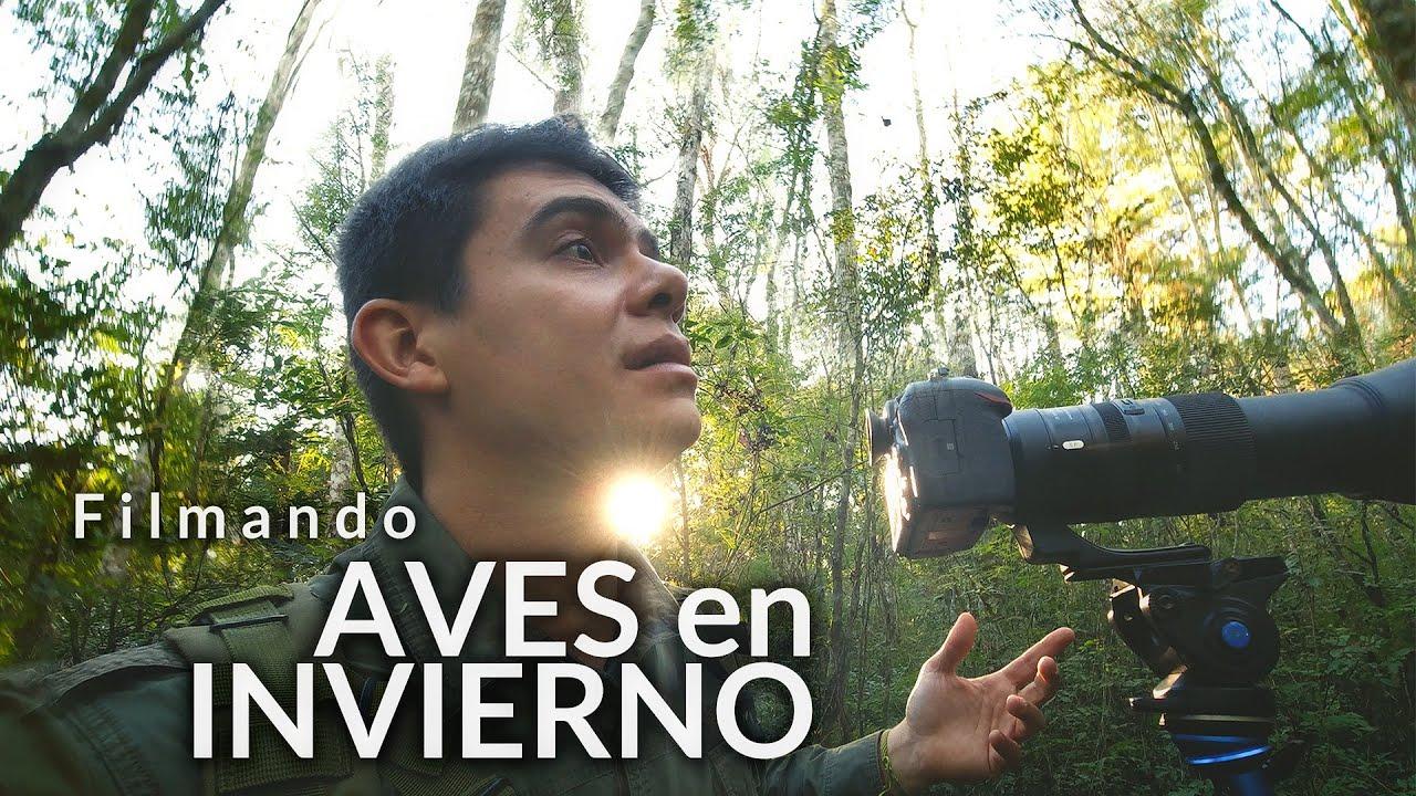 Aves de invierno en la selva | Winter birds in the forest | Birdwatching Bailarín Azul y otras aves