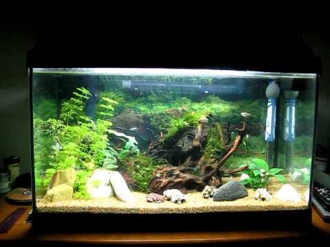My Aquarium With Eheim Professionel Ii 2026 Youtube