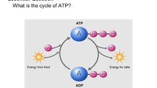 A. Chemical Energy and ATP