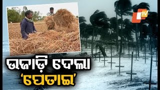 Cyclone Phethai destroys paddy, cotton crops in Odisha