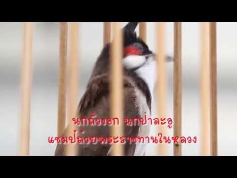 รายการเจาะสนามนก ออนทีวี ตอน ไก่พระองค์ดำ บานาน่า สูตรอาหาร