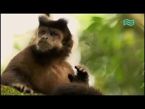 Flora y fauna: Selva Paranaense (capítulo completo) - Canal Encuentro