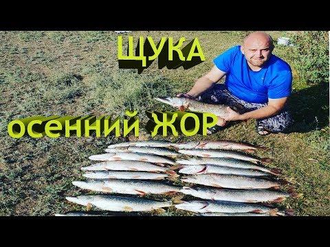 ЩУКА  осенний ЖОР!!!! Спонтанная Рыбалка