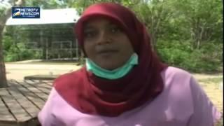 Stres, 80 Ekor Orangutan Jalani Rehabilitasi