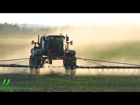 Are GMOs Safe? The Case of Roundup Ready Soy