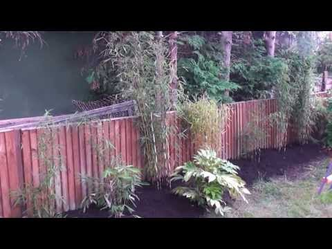 Bamboo dividing to create a hedge