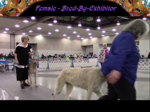 1-27-2017 Alexandria Kennel Club of LA -  Wolfhounds