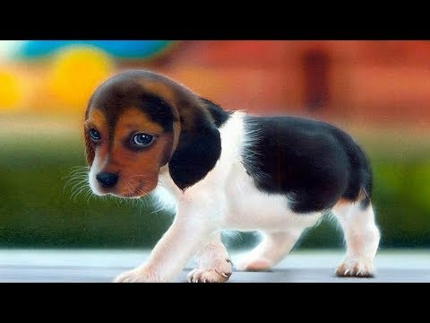 top-10-most-dangerous-dog-breeds-in-the-world-|-world's-deadliest-dog-breed