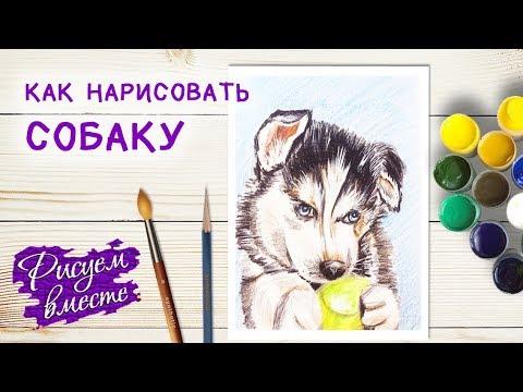 Как нарисовать собаку (щенка) цветными карандашами. Рисование. Рисуем вместе