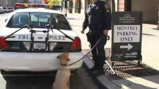 FBI Working Dogs