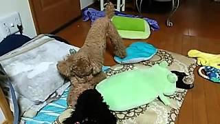 ケンカしてたのに、一瞬でおもちゃの取り合いに発展!