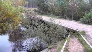 My Childhood Troll Bridge in Wareham Forest, Dorset