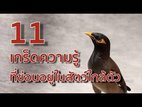 11 เกร็ดความรู้ ที่ซ่อนอยู่ในสัตว์ใกล้ตัว