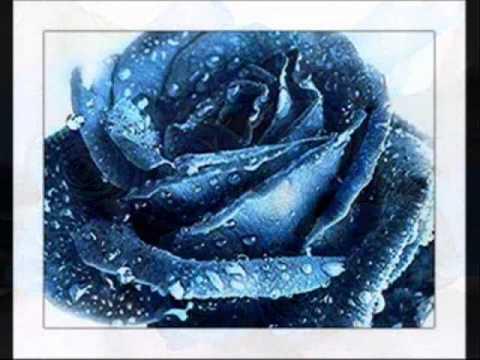 Whatsapp Default Wallpaper Hd Una Rosa Blu Michele Zarrillo Youtube
