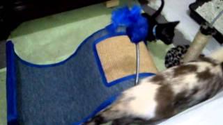 Trip - O gatinho superação