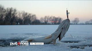 Календарь рыболова с 11 января по 18 января 2016 года от телеканала