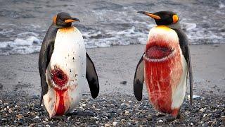 Посмотрите, Вот Почему Так Сложно Быть Пингвином