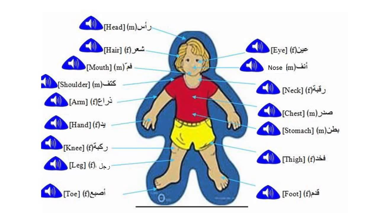 parts of the body in Arabic - YouTube