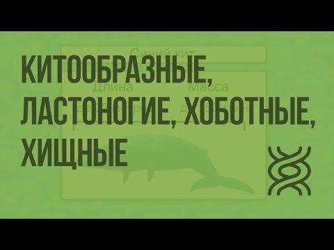Класс Млекопитающие.Китообразные, Ластоногие, Хоботные, Хищные. Видеоурок по биологии 7 класс