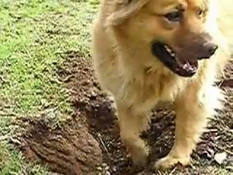 how to get my dog to stop digging