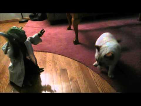 Yoda vs Cat