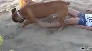 Whatsap masti dog and girl
