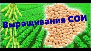 Технология выращивания сои от А до Я