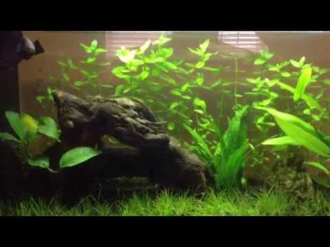 Aquascaping for beginners: Background Plant