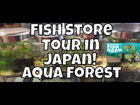 Japanese Fish Store Tour Aquarium store in Japan Aqua Forest in Shinjuku Japan
