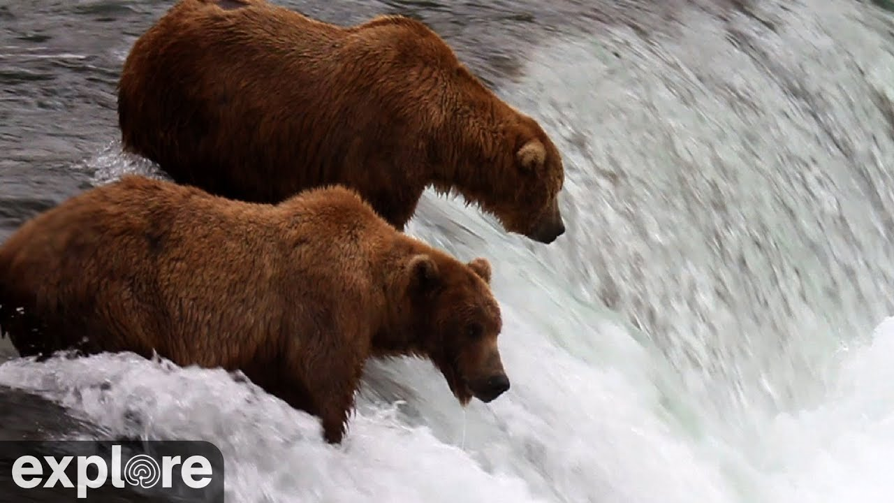 Brown Bear Cam - Brooks Falls in Katmai National Park