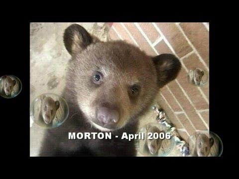 MORTON the Black Bear (7 years later)