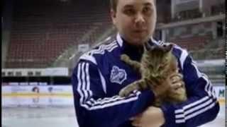 По стопам Золушки, или Как кот-воришка превратился в кошку Матроскину