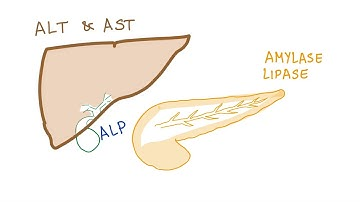 Glutamyylitransferaasi Koholla