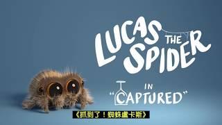【抓到了!蜘蛛盧卡斯】Lucas the Spider - Captured