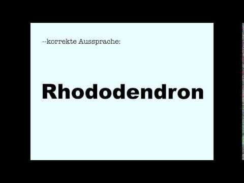 Korrekte Aussprache: Rhododendron