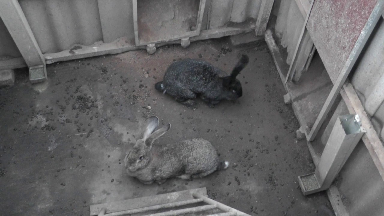 кроличья яма