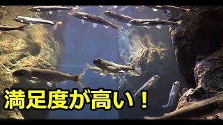 山の水族館 後編 「満足度は高い!」