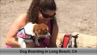 Dog Boarding Long Beach CA Colees Pet Care