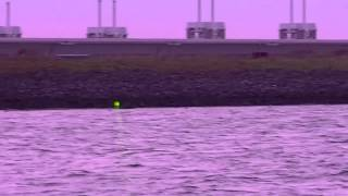 Deterring Eider Ducks At Mussel Farm With Laser At 100 Meters