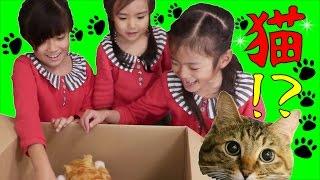 ネコが大好きな三姉妹。。。もうずっとネコかいたい、ネコかいたいって...